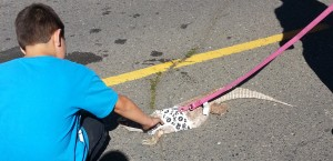Pets optional. This is a bad pic of a monitor lizard, on a leash, wearing a sweater.