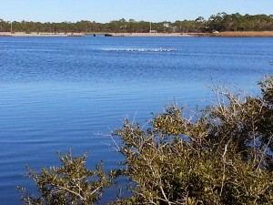 Western Lake in Grayton Beach State Park